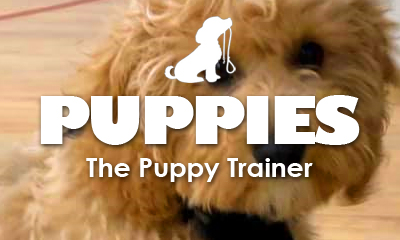 The Puppy Trainer